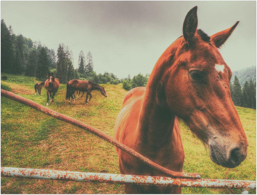 Jurassic horses by ernstkramer on 500px.com