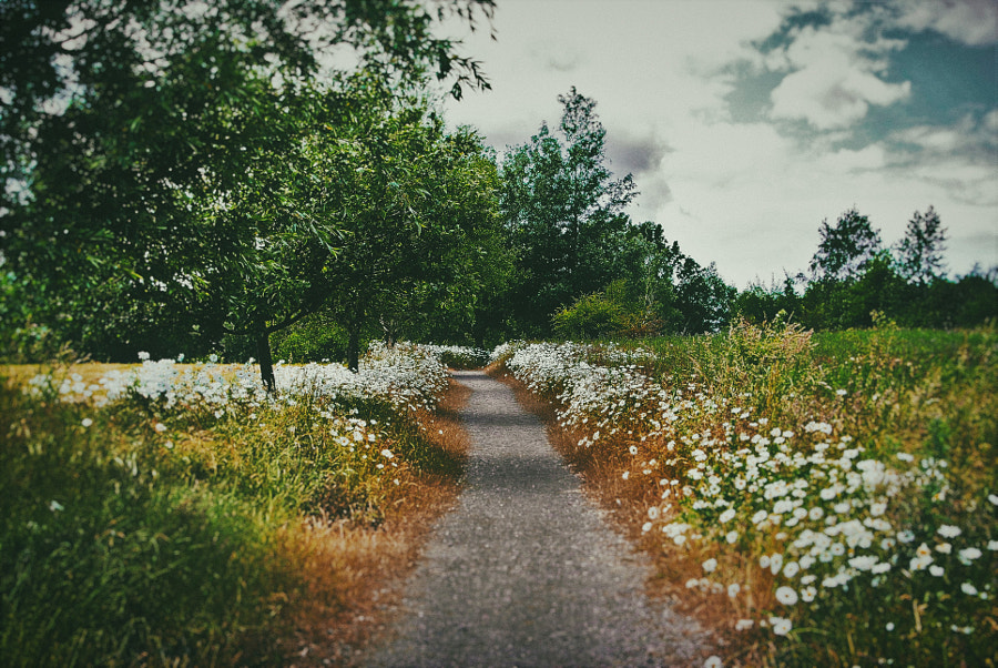 flowery path by moonsun  on 500px.com