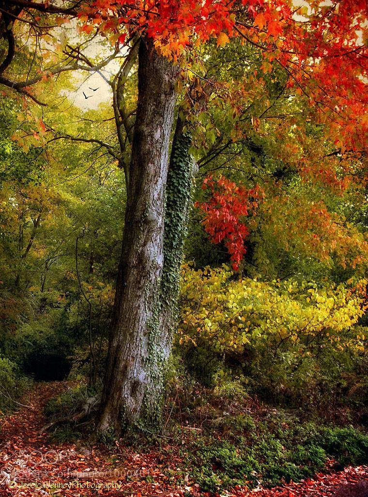 Photograph Autumn Ablaze by Jessica Jenney on 500px
