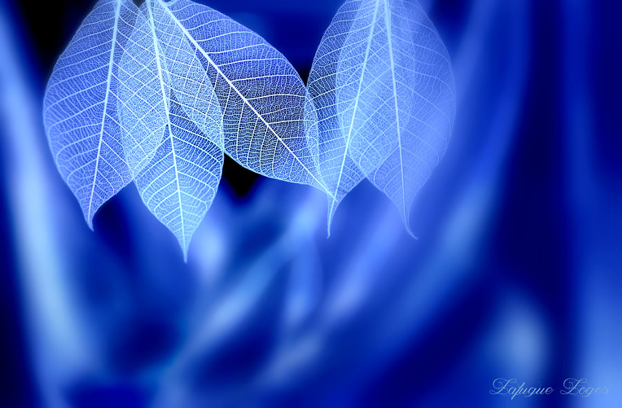 Photograph Blue syndrome〜Wind of Meditation by Lafugue Logos   on 500px