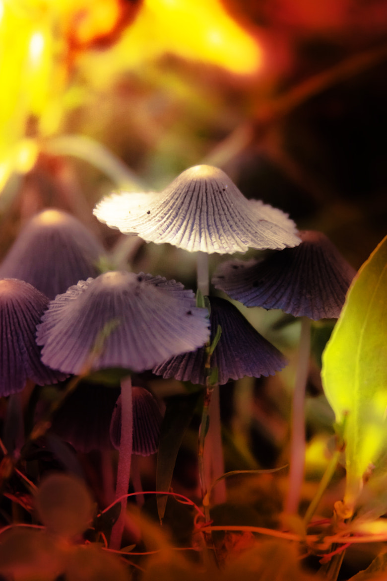 Photograph Small caps by Rucsandra Calin on 500px