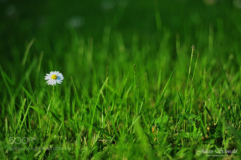 Photograph Green Grass  by Julian Schwald on 500px