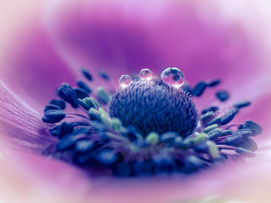 Картинки по запросу цветы макросъёмка