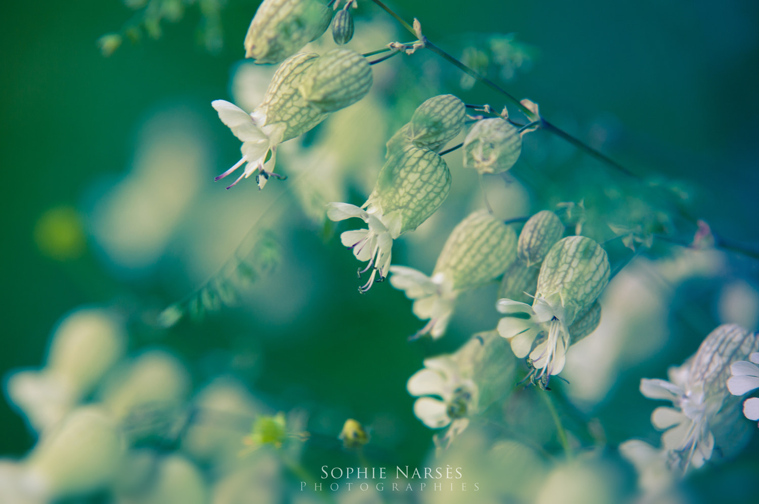 Photograph Calm by Sophie Narses on 500px