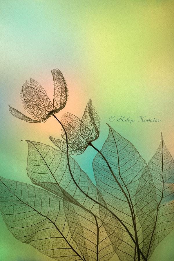 Beautiful Romance by Shihya Kowatari on 500px.com