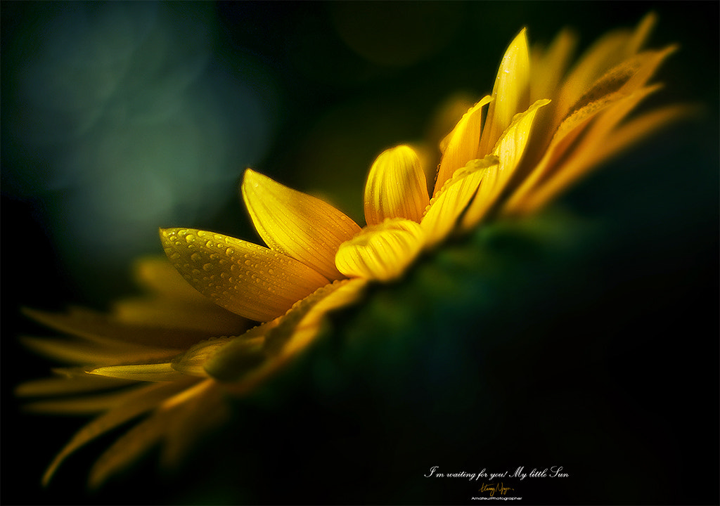 Photograph Tears of the Sun  by Hoang Nguyen on 500px