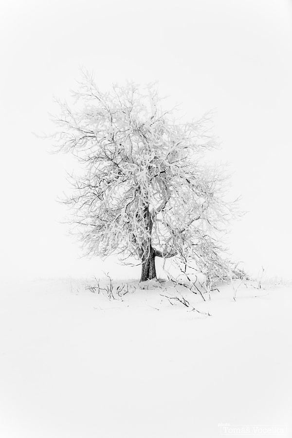 White darkness by Tomáš Vocelka on 500px.com