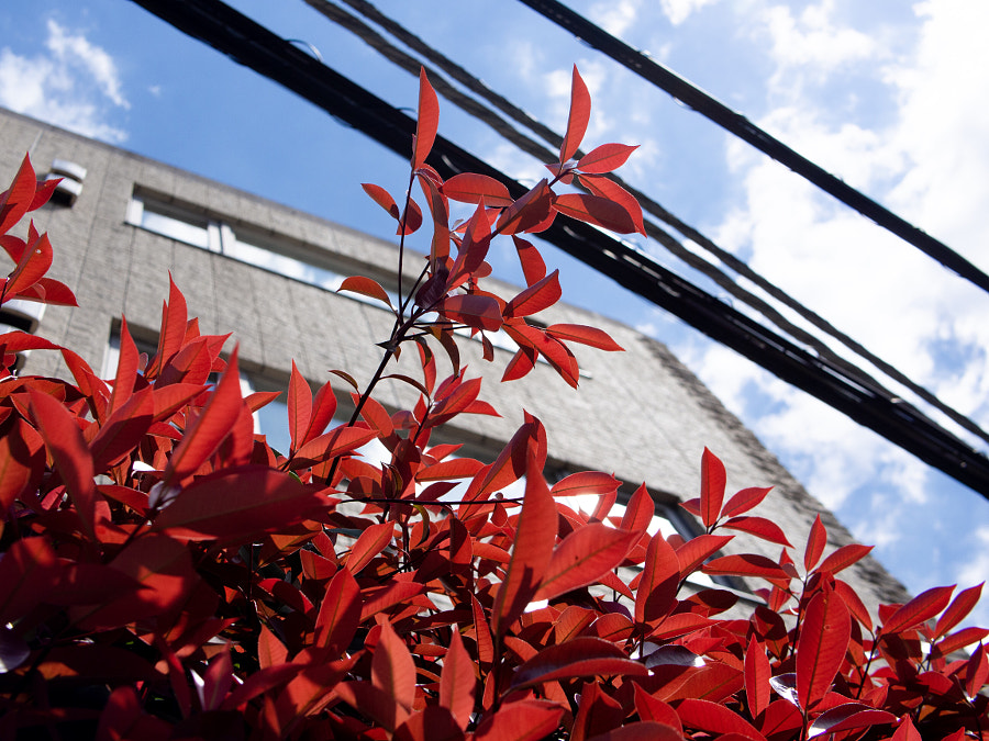 leaf by chu fujimura on 500px.com