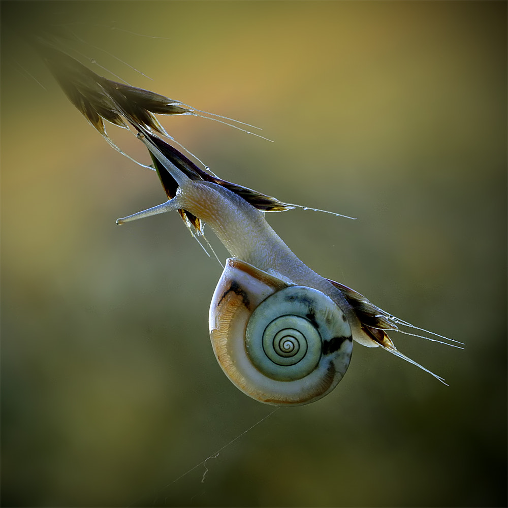 Photograph Snail in the morning by ivo pandoli on 500px