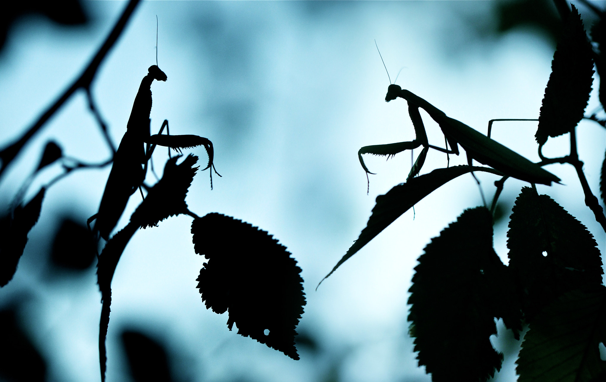 Photograph Mantis Affinity by Sébastien DEL GROSSO on 500px