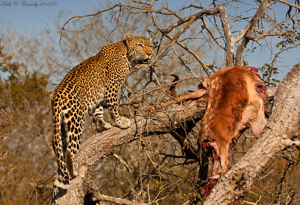 Photograph View to a kill by Keith Connelly Photographics on 500px