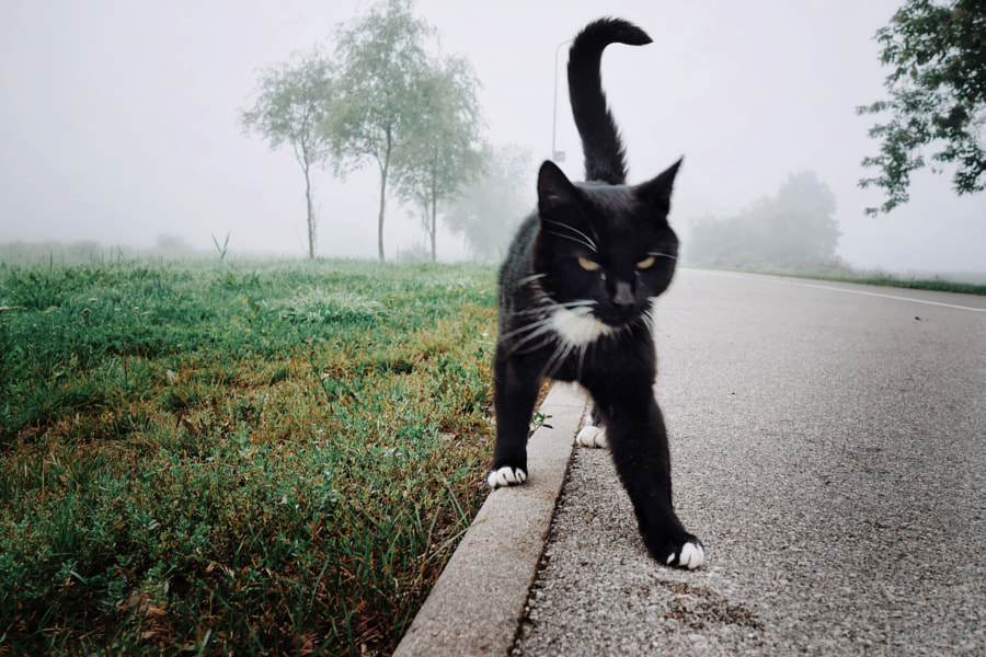 Foggy morning and cat  by Natalja Iljina on 500px.com