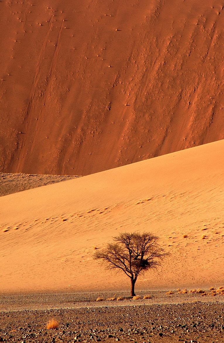 Photograph Solitaire Tree by Elmar Weiss on 500px