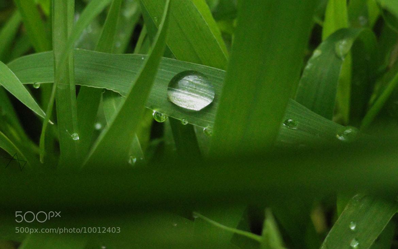 Photograph grass by ajinkya dixit on 500px