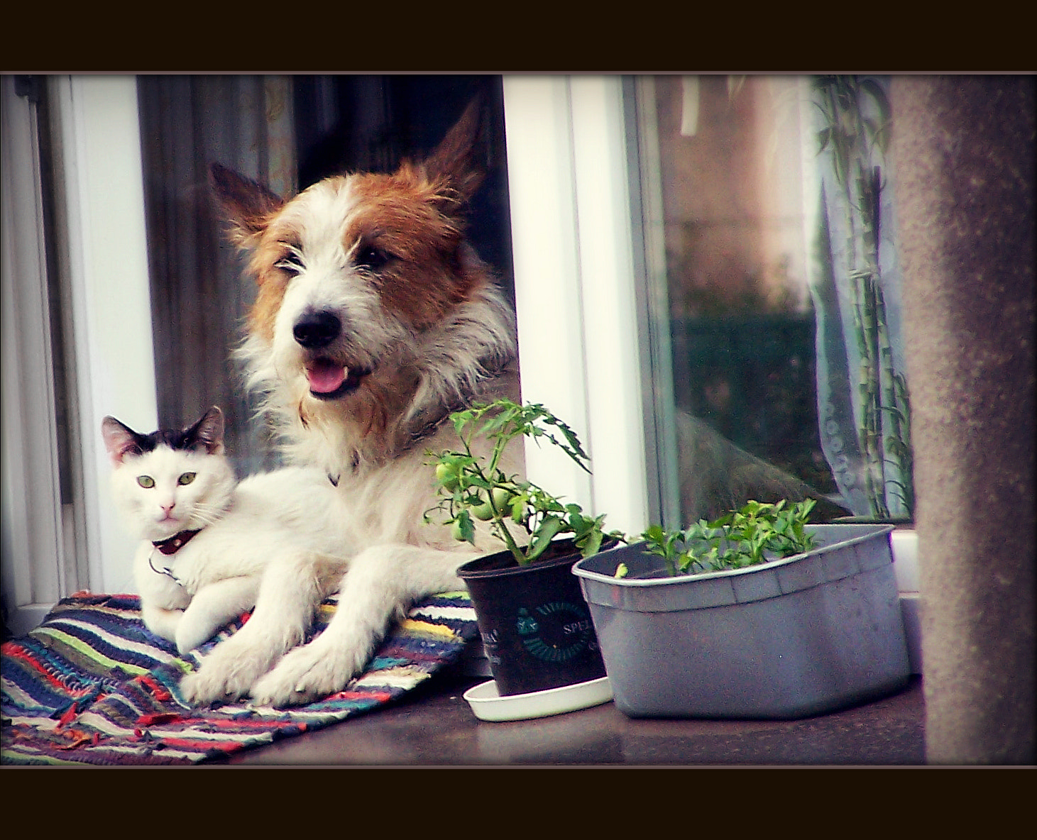 "Photograph best friends: ""like cats and dogs"" by lucky hidden Dragon on 500px"