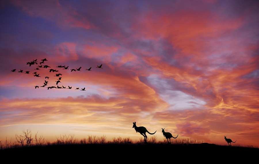 PHW sunset outback kangaroo by Jean Dominique Martin on 500px.com