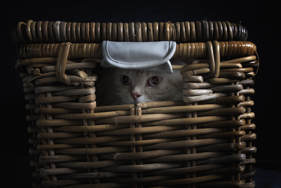 Cat in the basket by Petra van Rijswijk on 500px.com