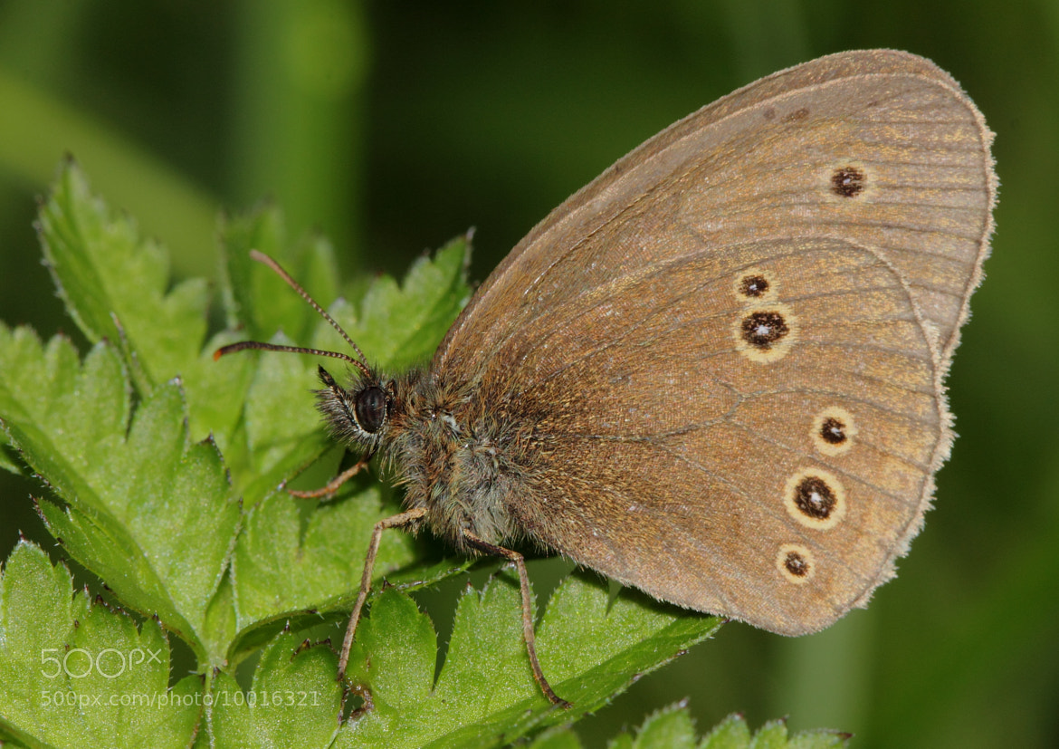 Photograph Ringlet by Kat  on 500px