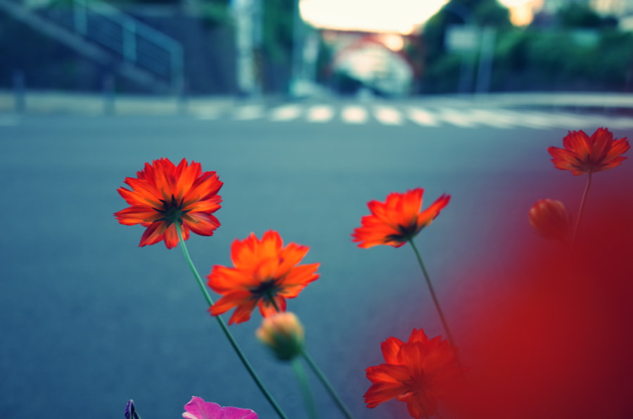roadsideflowers by fototsubu  on 500px.com