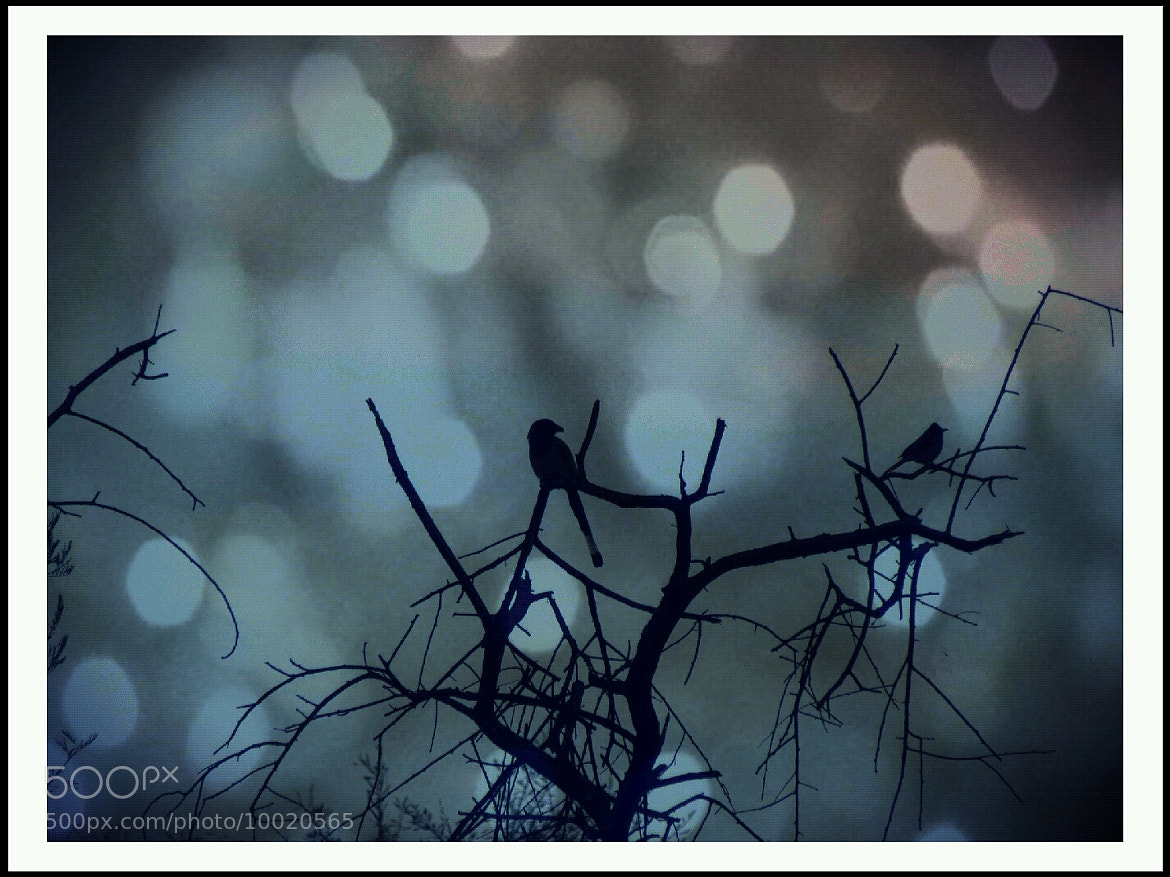 Photograph Birdy Bokeh by Pranesh Kumar on 500px