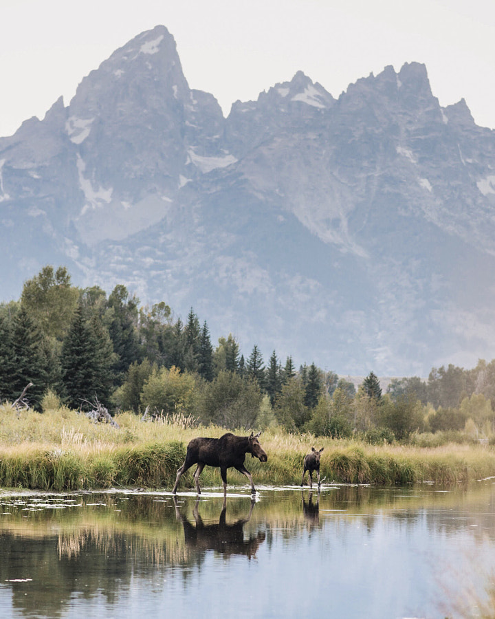Mother and Calf.  by Tanner Wendell Stewart on 500px.com