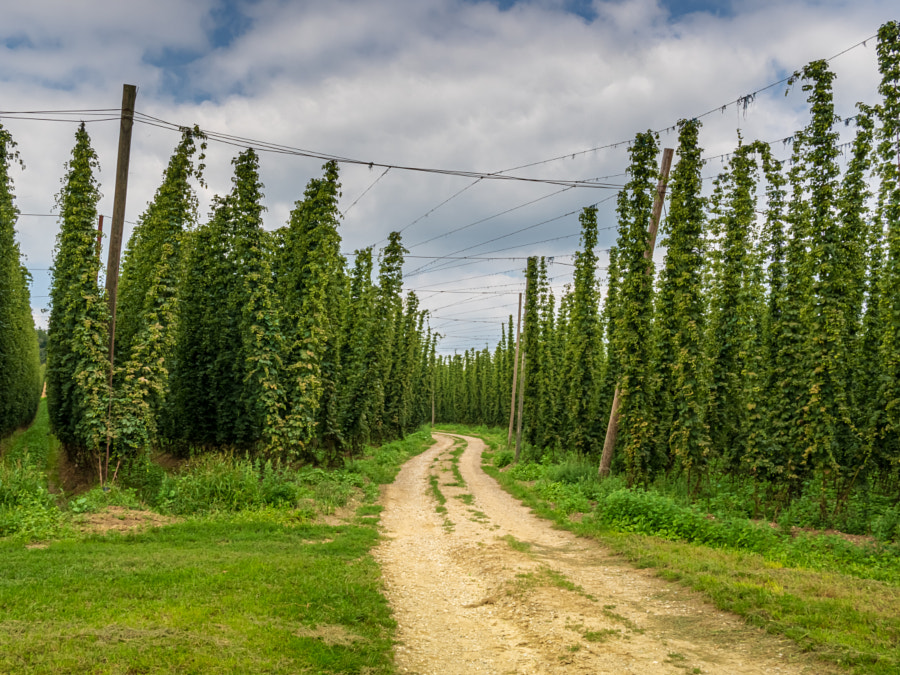 Bavarian Original and traditional Hop garden by Wolfgang Hauke on 500px.com