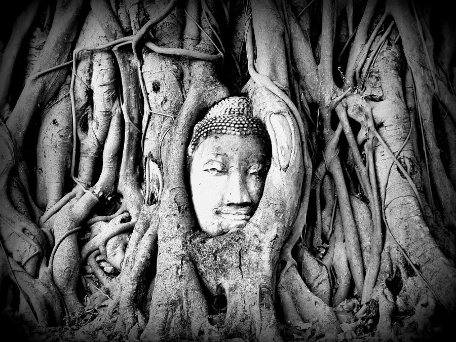 Buddha in a banian by Yves LE LAYO on 500px.com