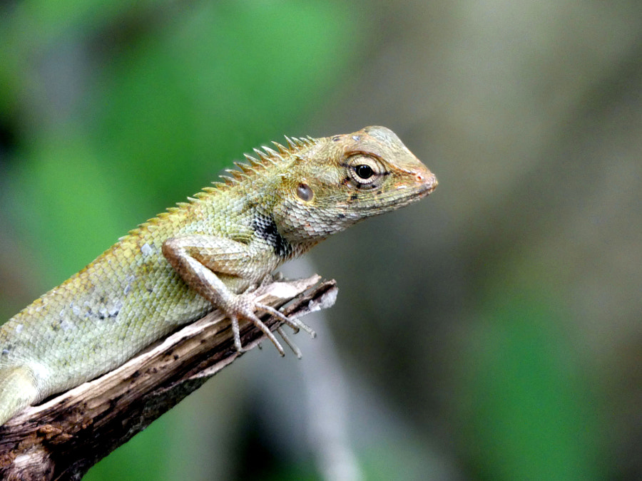 Lizard on a tree by Yves LE LAYO on 500px.com