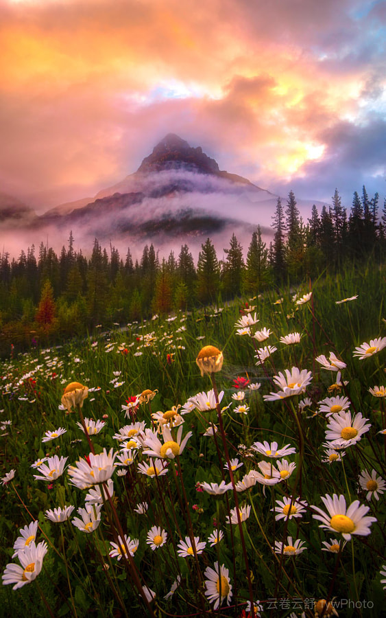 那些花儿 Wild flowers in Rockies by 云卷云舒 fywPhoto  on 500px.com