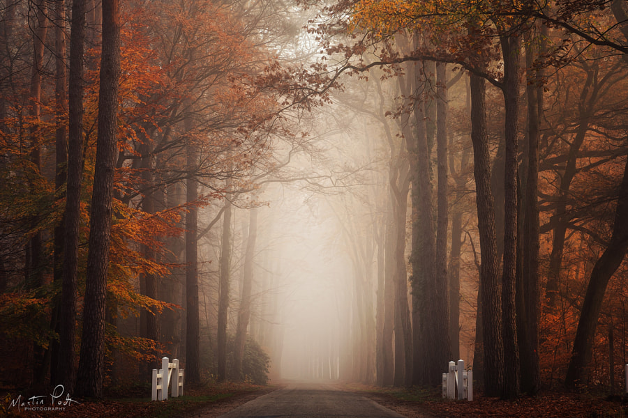 Autumn by Martin Podt on 500px.com