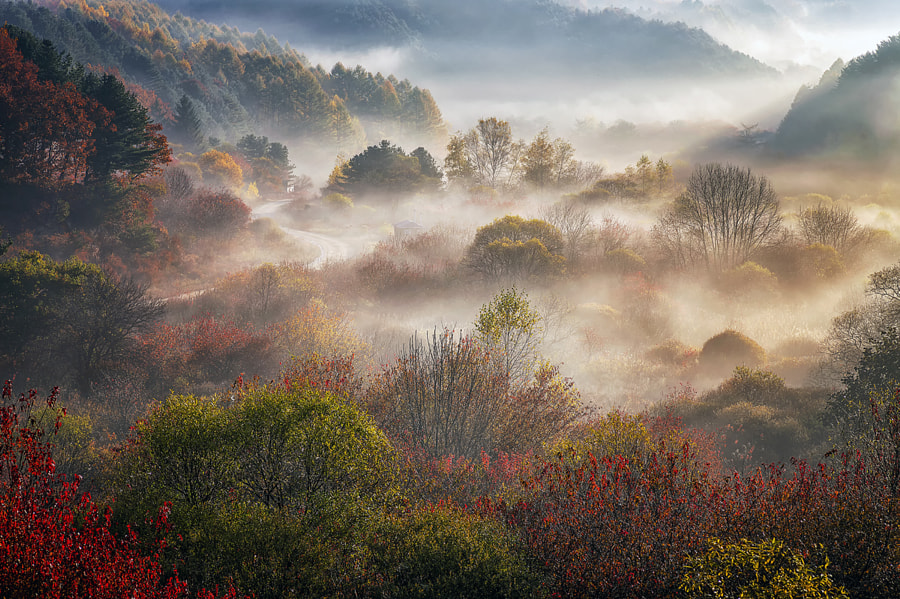 dream of autumn by c1113  on 500px.com