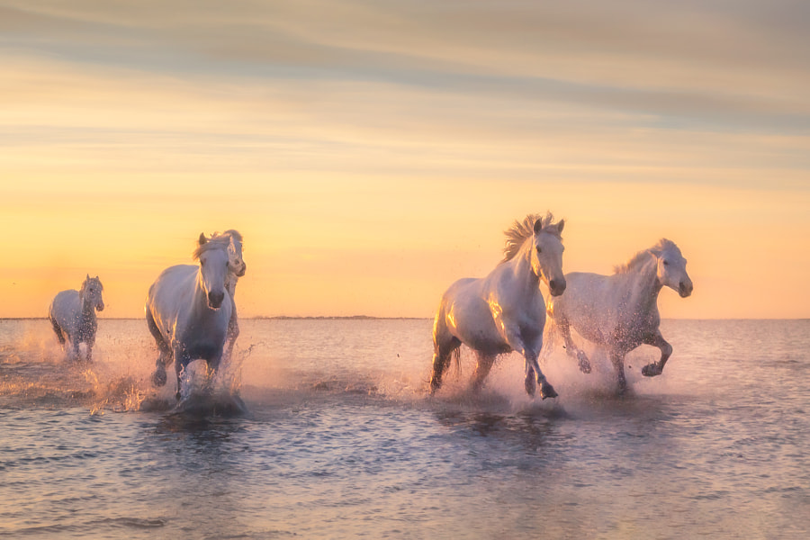 Camargue by Georg Scharf on 500px.com