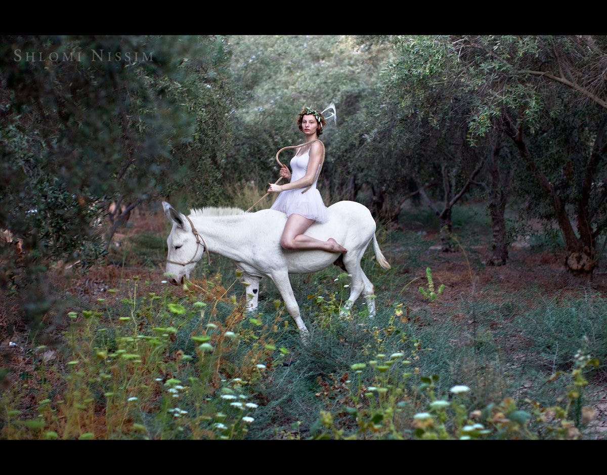 Photograph MESSENGER ON A WHITE DONKEY by shlomi nissim on 500px