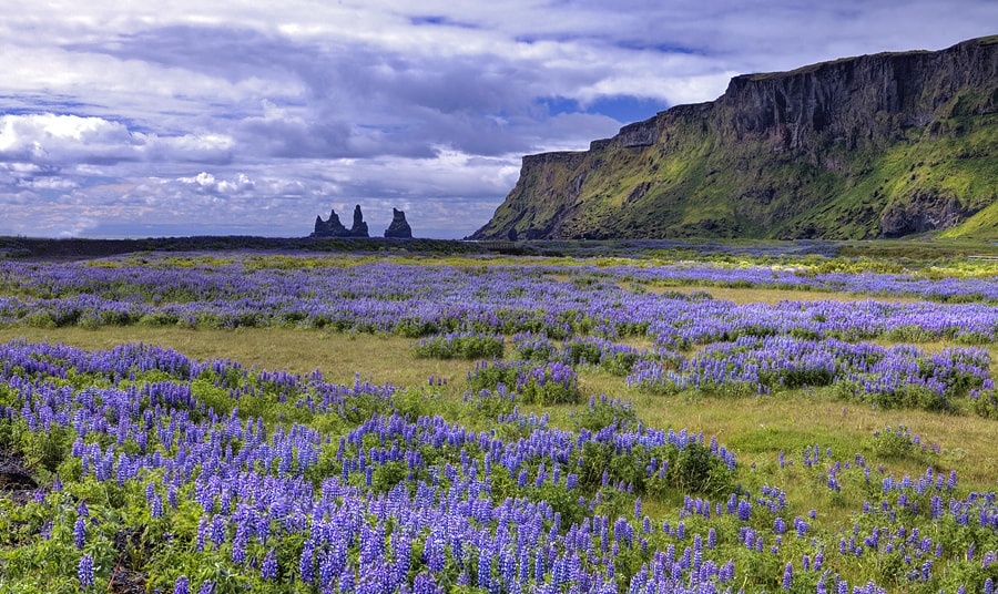 Photograph The Fields of Vik # 2 by Aubrey Stoll on 500px