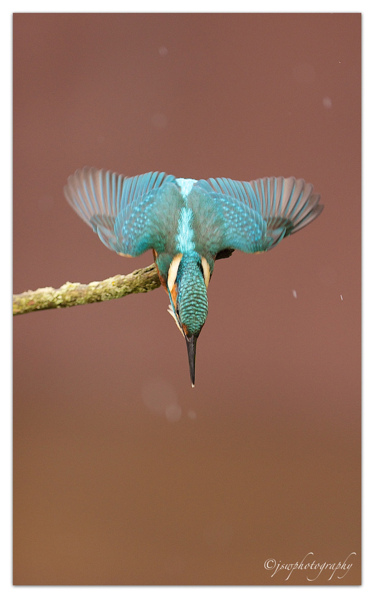 Photograph Dive….!! by Jason Wood on 500px