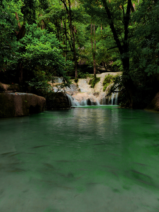 Somewhere in the Thai jungle by Yves LE LAYO on 500px.com