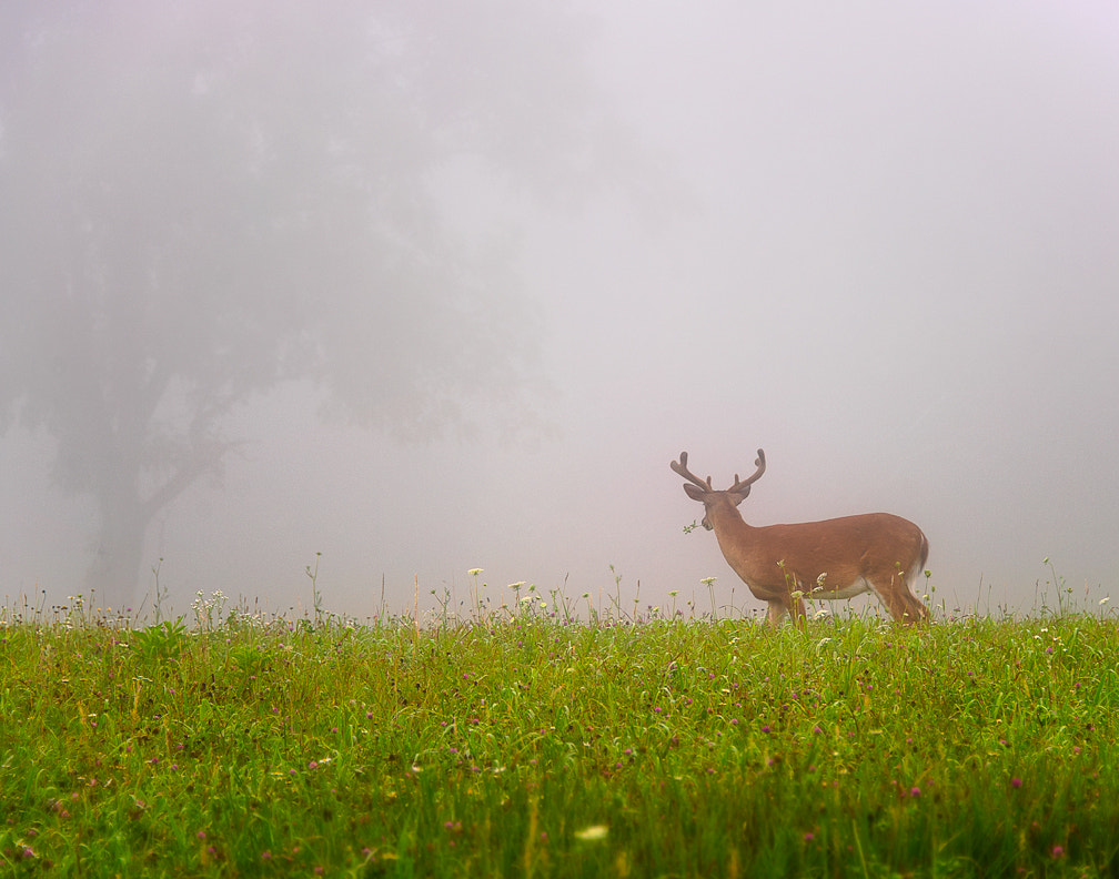 Photograph The Deer by Ken Toney on 500px