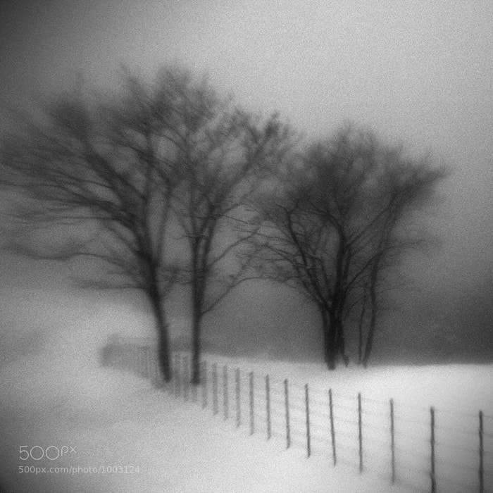 Photograph A Day in Snowy Lands #22 by Namdon Kim on 500px