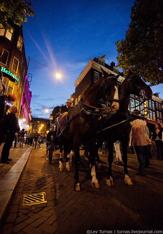 Photograph Horses in Amsterdam by Lev Turnas on 500px