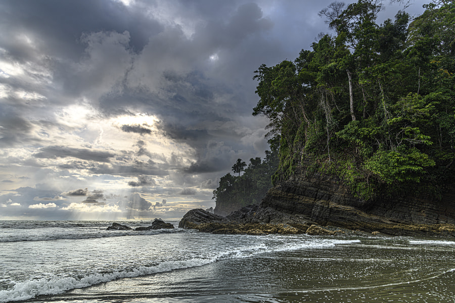 Rain forest meets ocean by Mark Bennett on 500px.com
