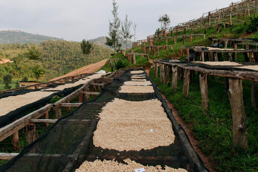 Coffee Drying Tables in Rwanda by Aidan Campbell on 500px.com