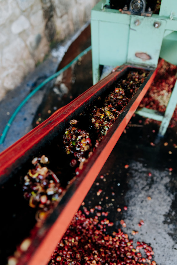 Coffee Cherries being Pulped by Aidan Campbell on 500px.com