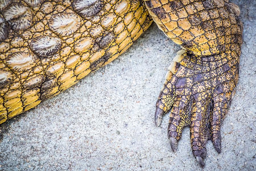 Victoria Falls Crocodile Farm and Nature Sanctury