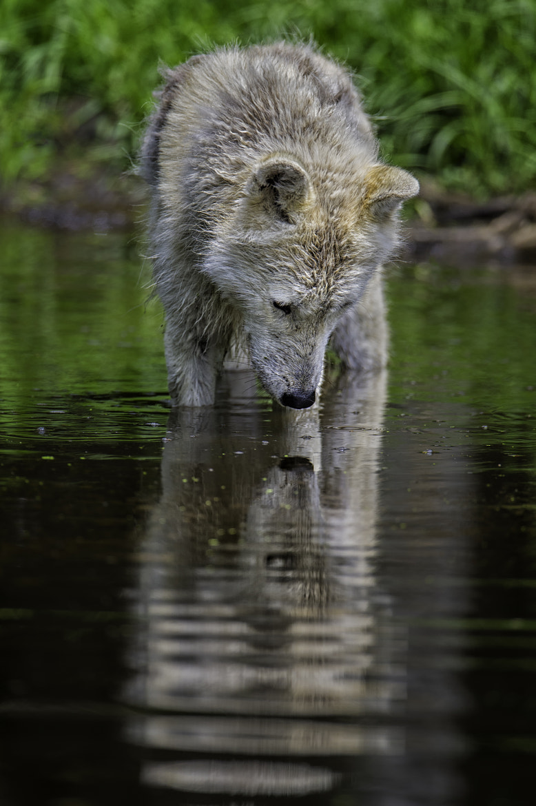 Photograph Pondering ones reflection by Daniel Parent on 500px
