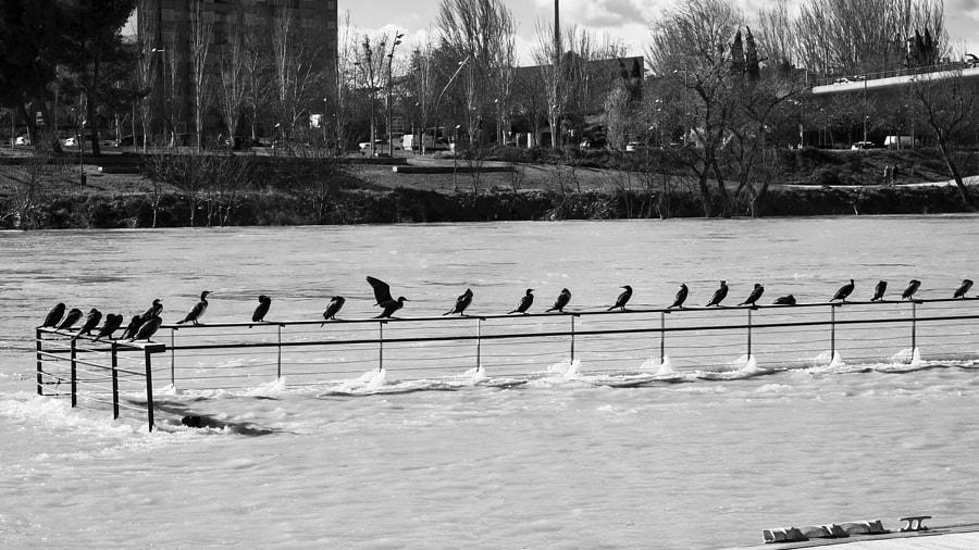 Birds line by Ana V. on 500px.com