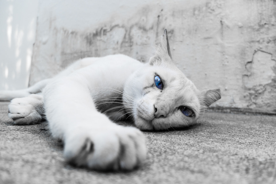 Photograph Cat #14 by Gabriel Choo on 500px