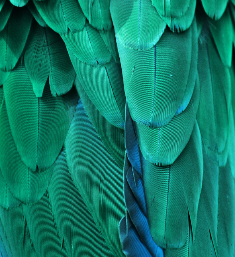 Blue Feathers by Michael Fitzsimmons on 500px.com