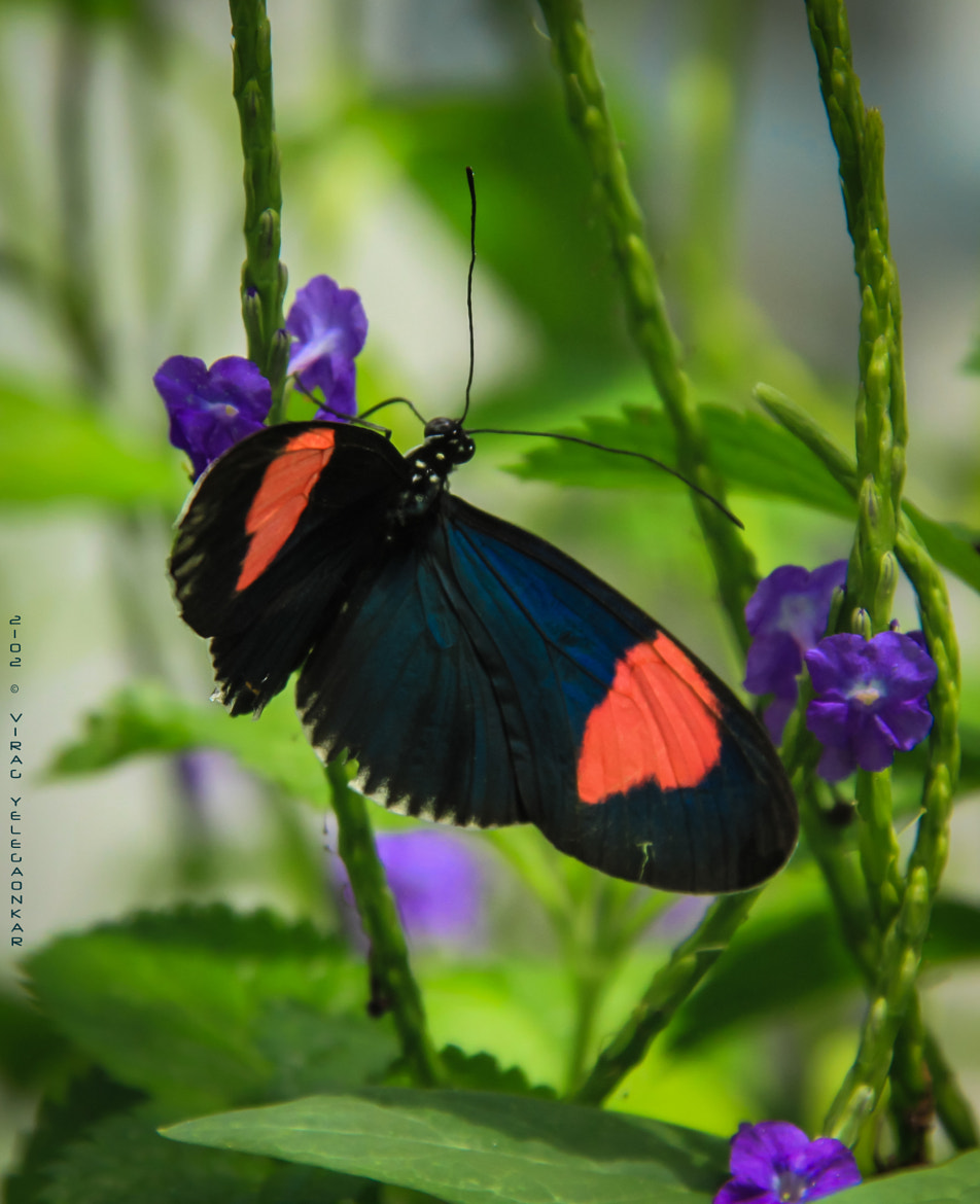 Photograph ButterFllyy by Virag Yelegaonkar on 500px