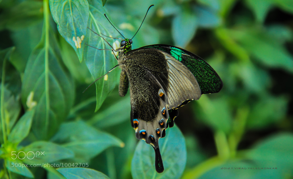 Photograph ButterFly... by Virag Yelegaonkar on 500px
