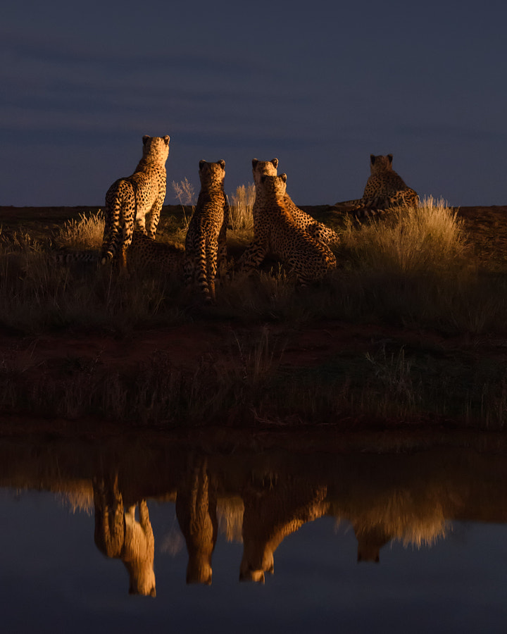 Dinner At The Horizon by Marsel van Oosten on 500px.com